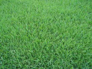 grama esmeralda rj