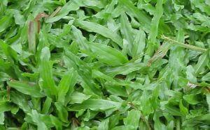 grama são carlos plus rj